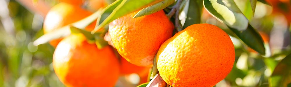 KITRO全商品共通の柑橘系香り成分